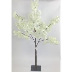 Arbre cerisier blanc H120