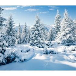 Toile de fond hiver sapin blanc