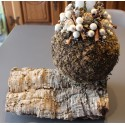 Décoration œuf bois